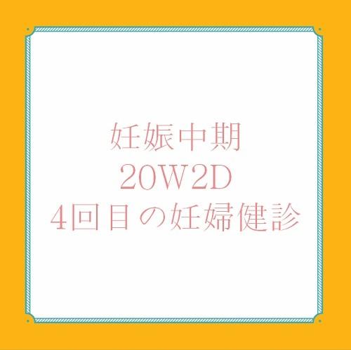 アメリカ出産体験記 20W 2D 妊婦健診