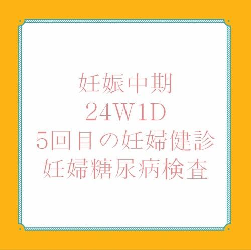 妊娠中期24W 1D妊婦健診